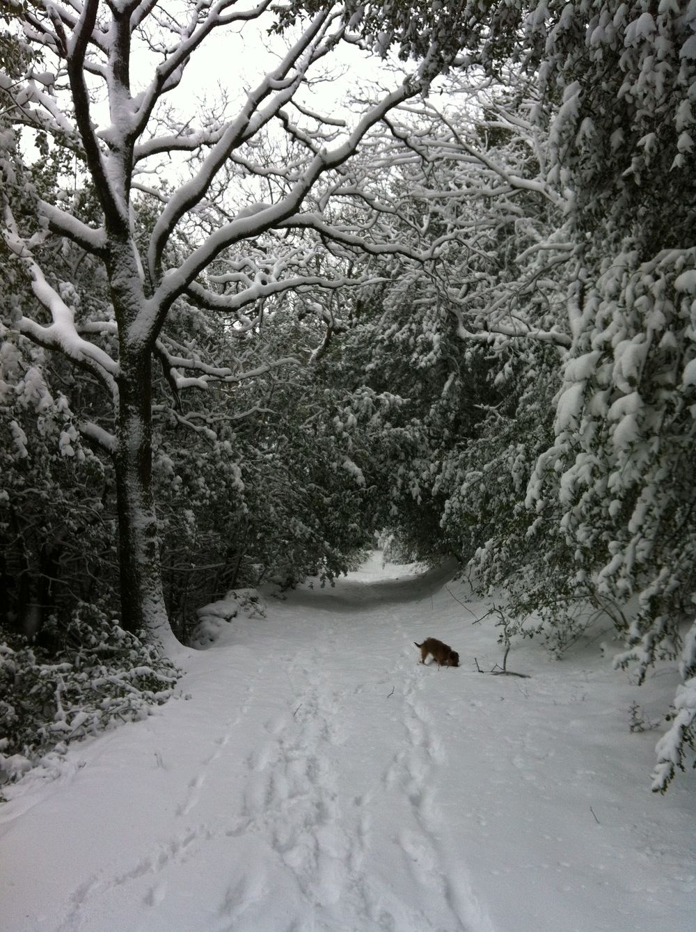 Tess walk in snow