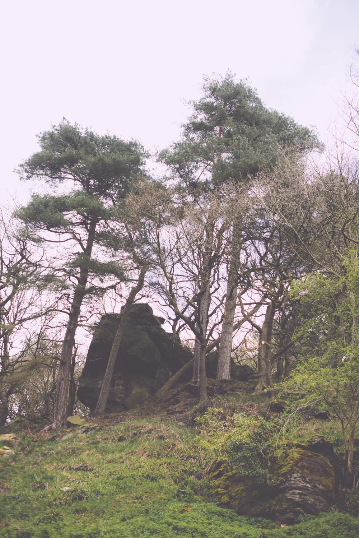 Woodland_Stories_013.jpg