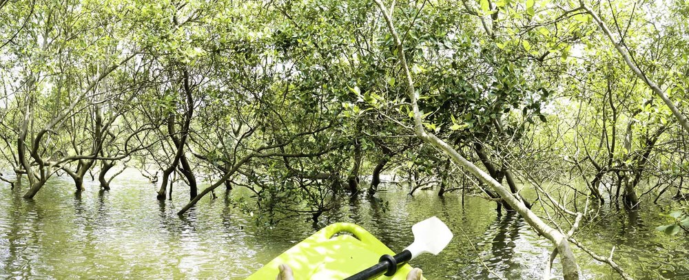 Inside the mangroves on kayak during a Goa Adventure Tour with The Mandala Resort