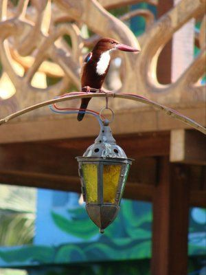 A bird alights atop an arched gateway above a hanging lamp in the yard of The Mandala