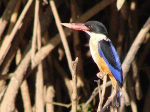 A blue, black and orange bird at The Mandala