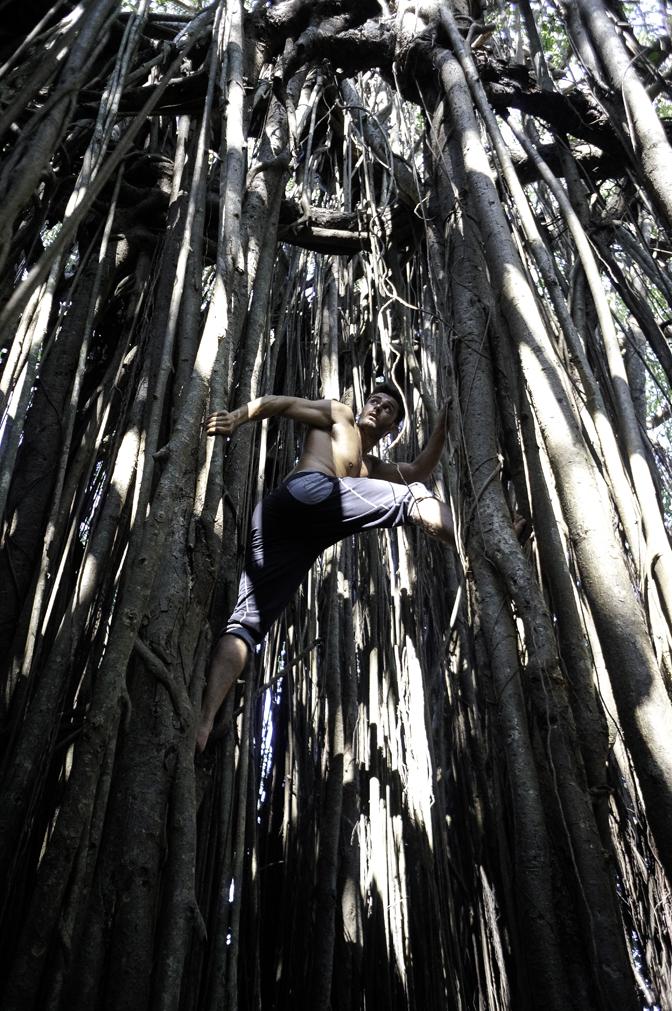 jiyoy-banyan-tree-2.jpg