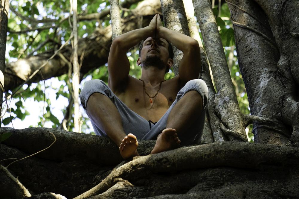 jiyoy-banyan-tree-20.jpg