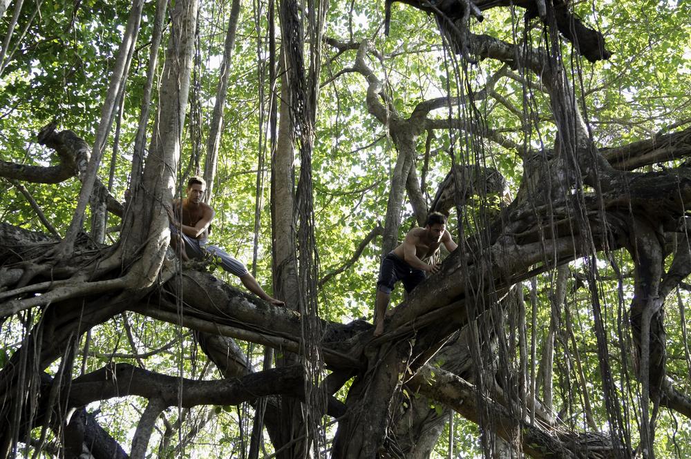 jiyoy-banyan-tree-35.jpg