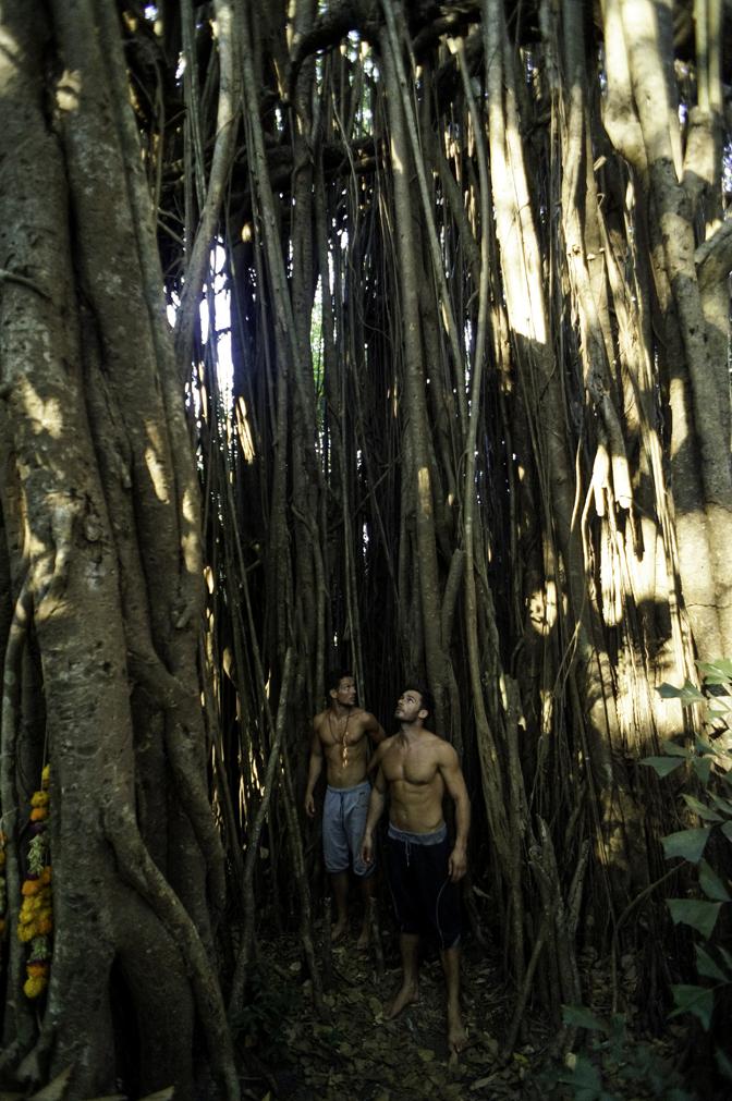 jiyoy-banyan-tree-59.jpg