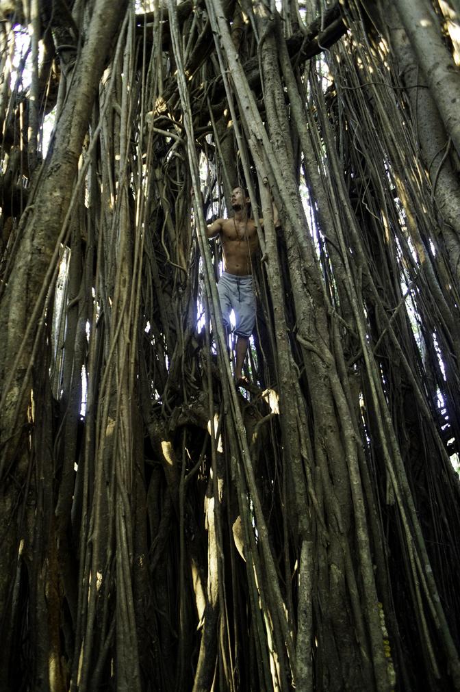 jiyoy-banyan-tree-62.jpg