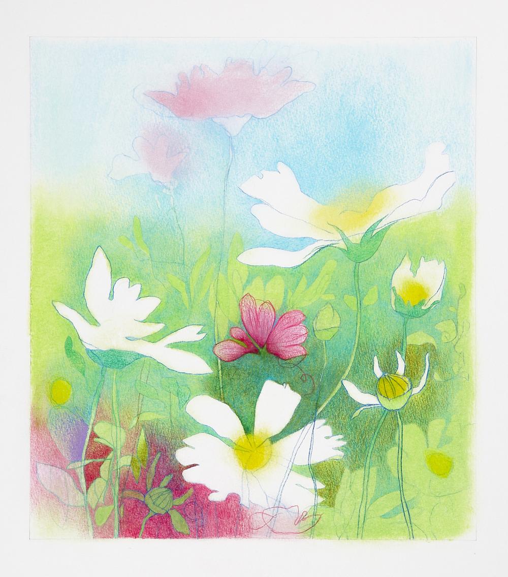 DavidLyonWildflowers viii - 095 - 150dpi.jpg