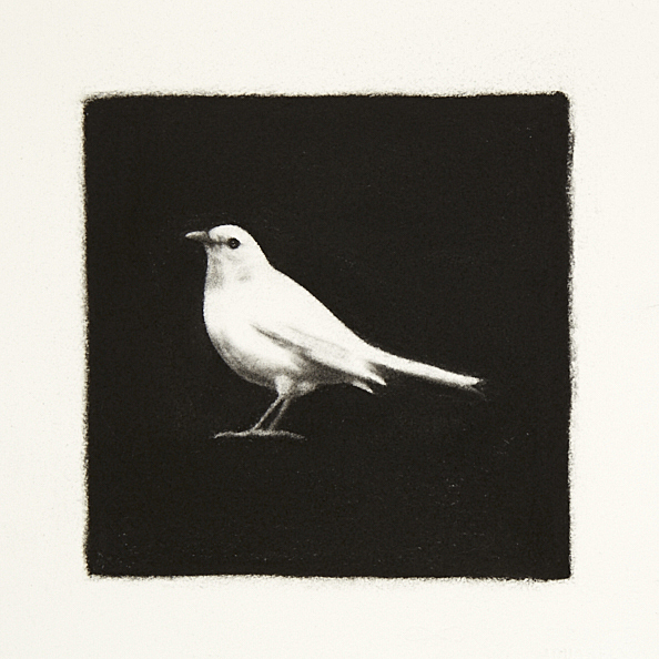 White Blackbird