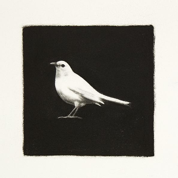 White Blackbird - 72dpi 20%.jpg