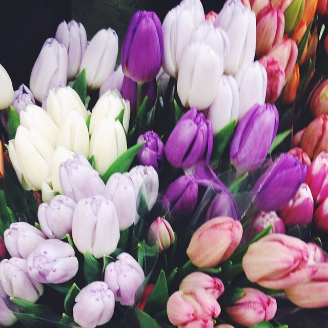 Happiness is tulips in (almost) spring. We can feel our bodies and our minds beginning to thaw. Ready for new life.