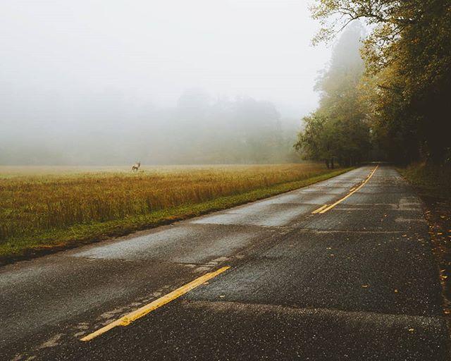 Taking an enchanted drive through the fog