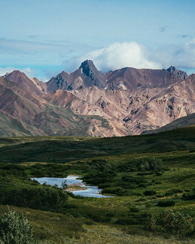 Memories of Alaska.  Forever counting the days until I can come back to visit this part of the world again. This shot comes from a late bus ride back out from deep within Denali NP.