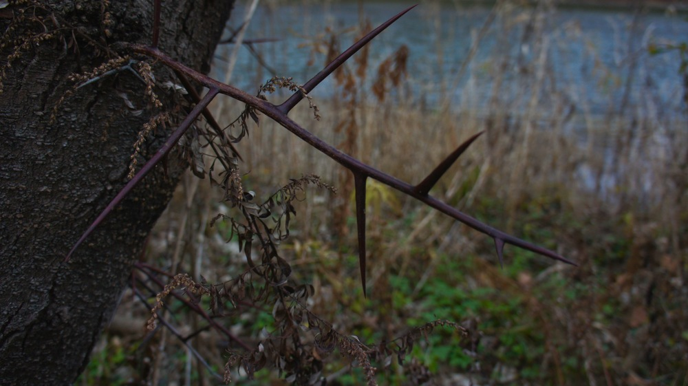 Thorns.