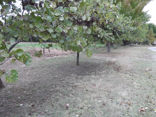 Centennial Park - Shawnee OK (1).JPG