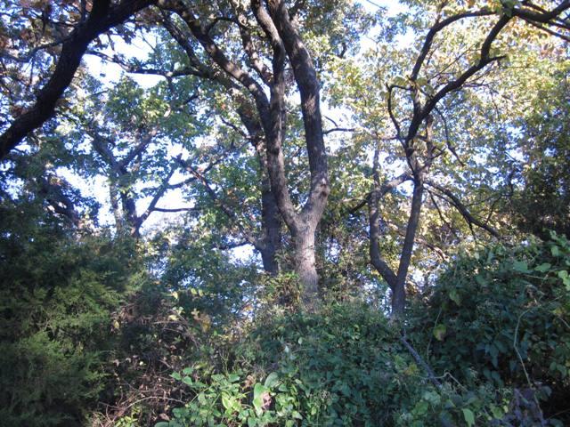 Kenwood Park - Shawnee OK (4).JPG