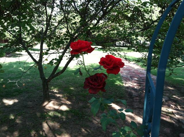 Rose Garden Park - Shawnee OK (14).jpg