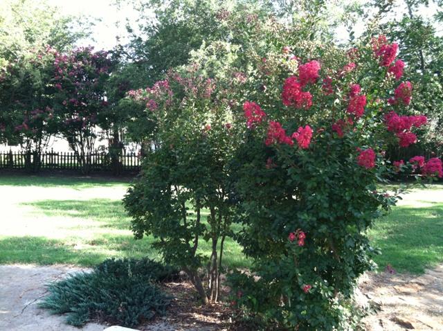 Rose Garden Park - Shawnee OK (22).jpg