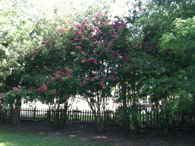 Rose Garden Park - Shawnee OK (23).jpg