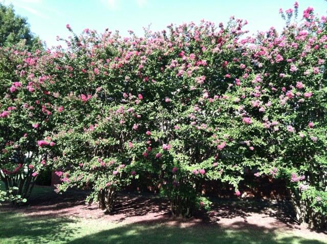 Rose Garden Park - Shawnee OK (25).jpg
