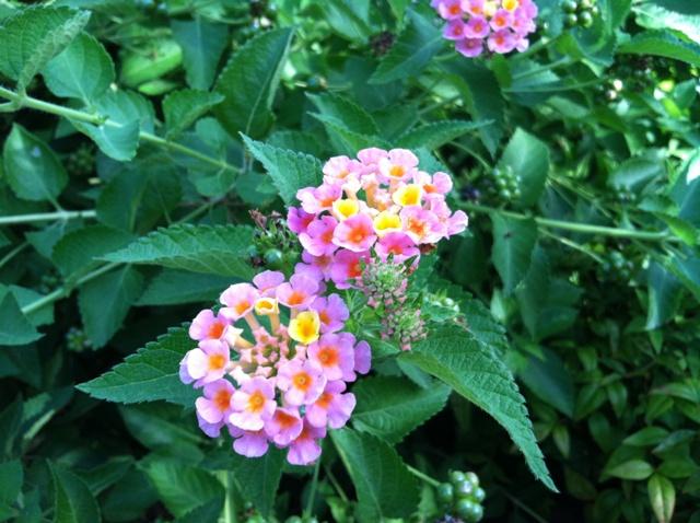 Rose Garden Park - Shawnee OK (28).jpg