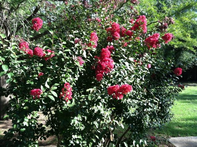 Rose Garden Park - Shawnee OK (29).jpg