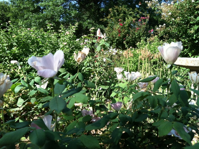 Rose Garden Park - Shawnee OK (30).jpg