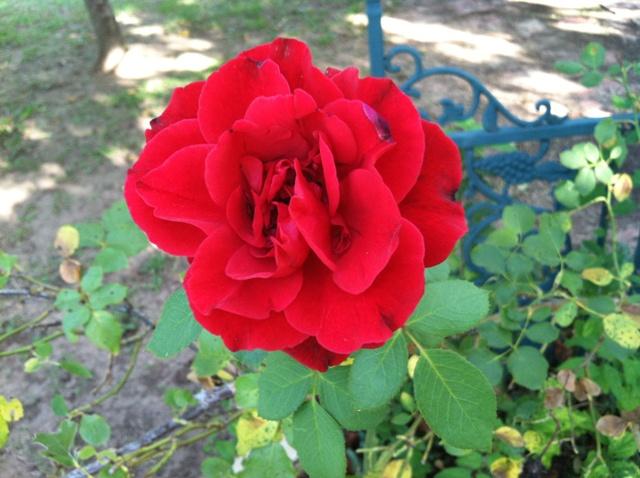 Rose Garden Park - Shawnee OK (35).jpg