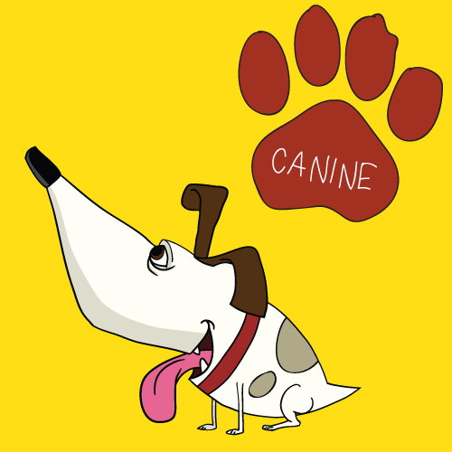 © Canine