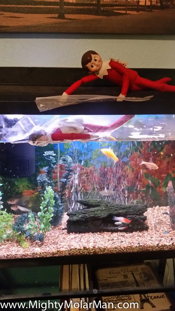 Elf On The Shelf Photo Contest-19.jpg
