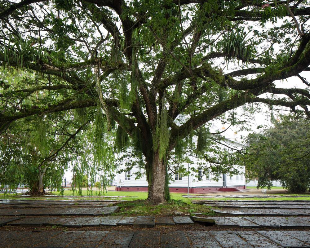 019_Suriname_2013_08700.jpg