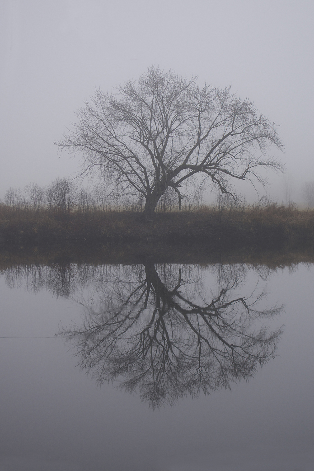 River reflection.jpg