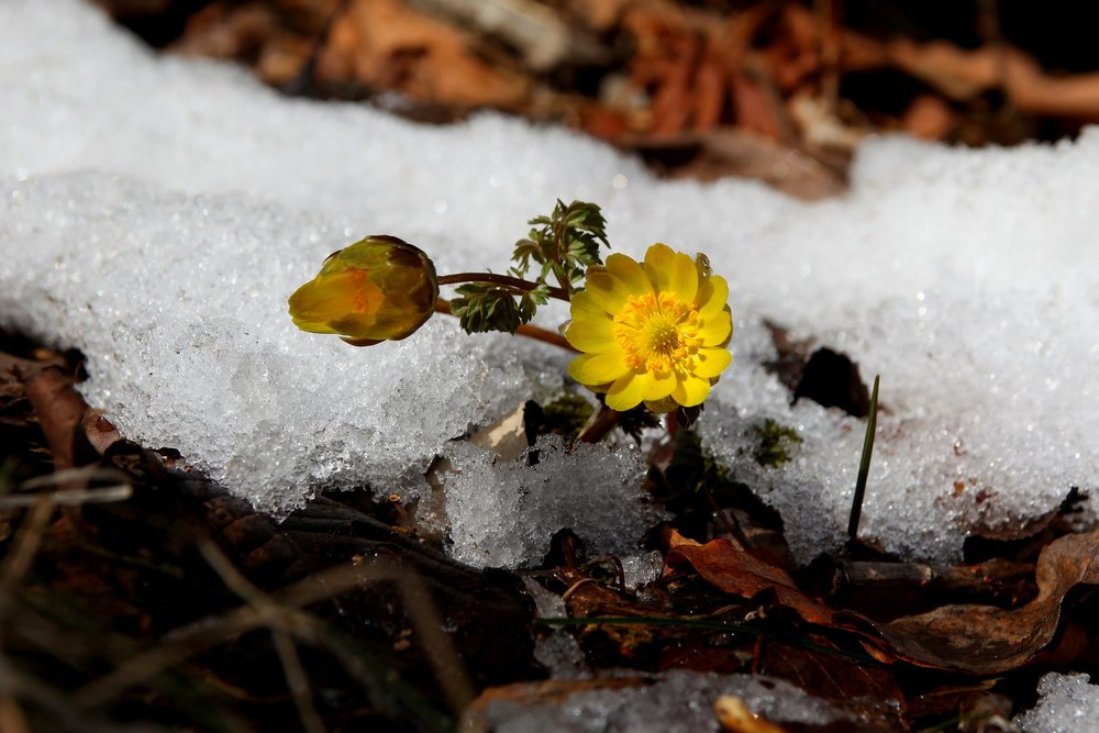 snow-3280731_1920.jpg