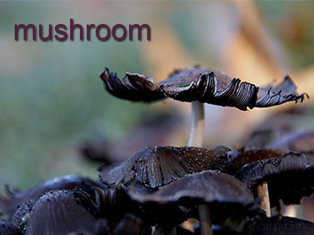 Color: Mushroom CHIARIstyle