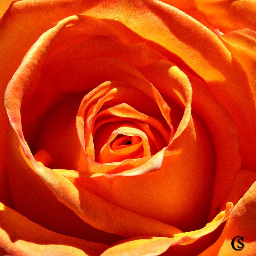 orangeblossom-CHIARIstyle.jpg