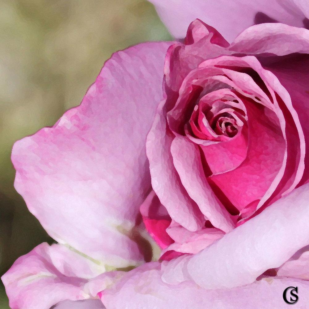 pink-dreamer-CHIARIstyle.jpg
