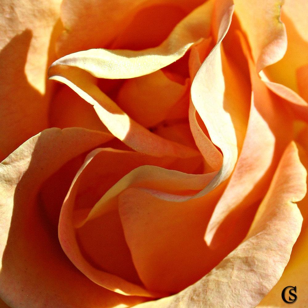 orangesherbert-CHIARIstyle.jpg