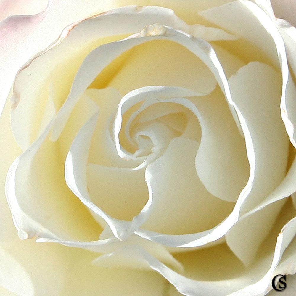 white-CHIARIstyle.jpg