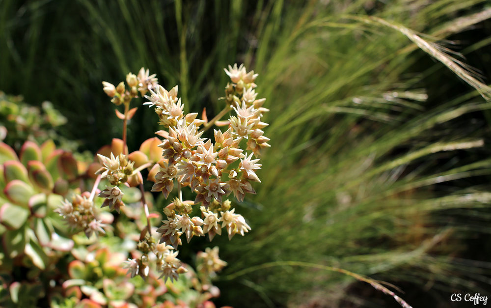 plant-catus-CHIARIstyle.jpg