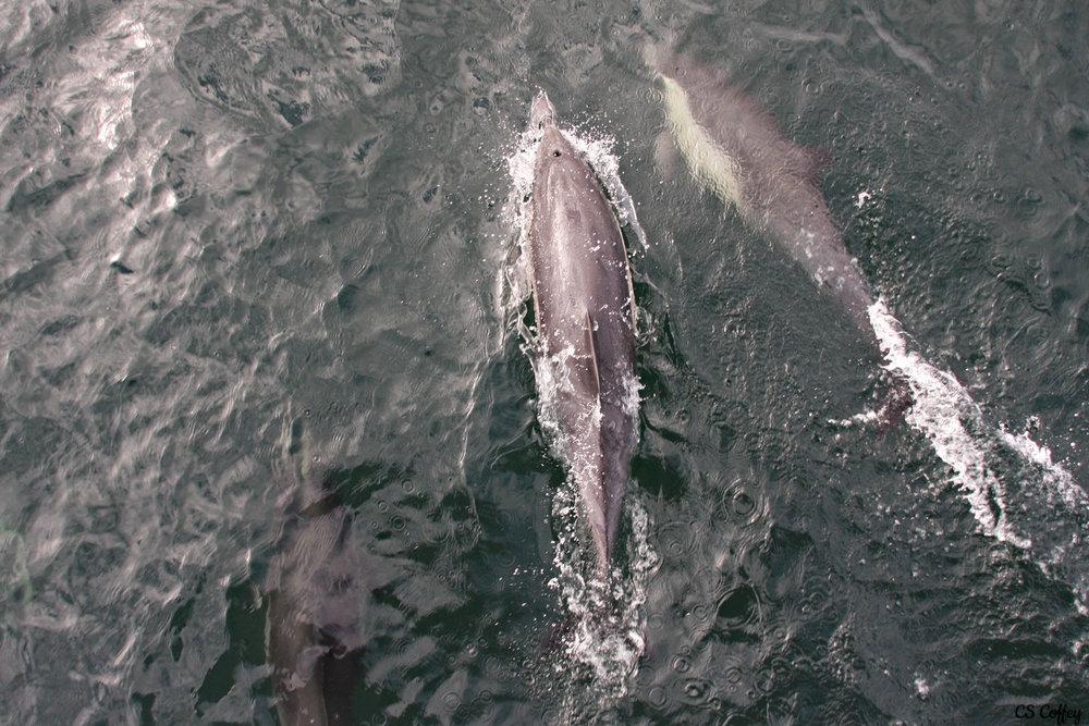 whale-trip-feb-17-Dolphins-lead-CHIARIstyle.jpg