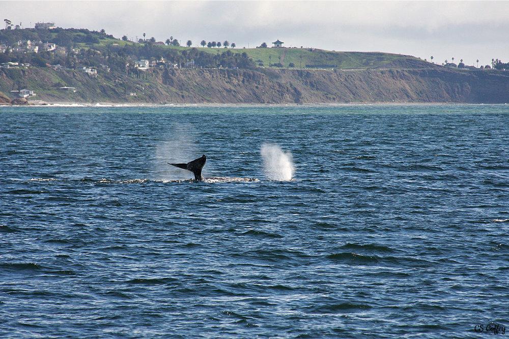 whale-trip-feb-17-talking-tale-CHIARIstyle.jpg