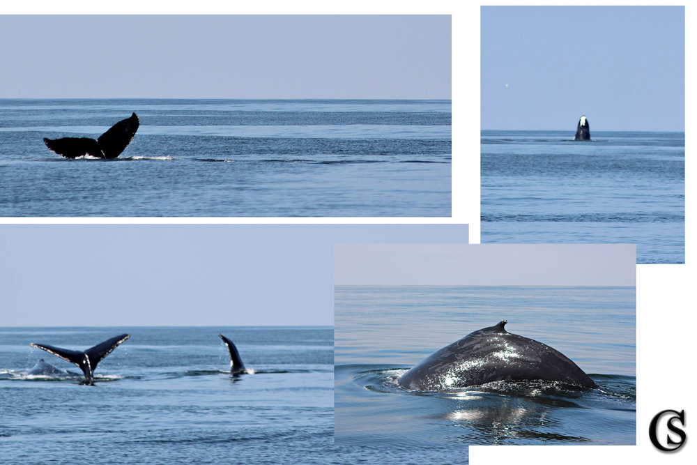 Morro Bay Whale Trip August 2017 CHIARIstyle