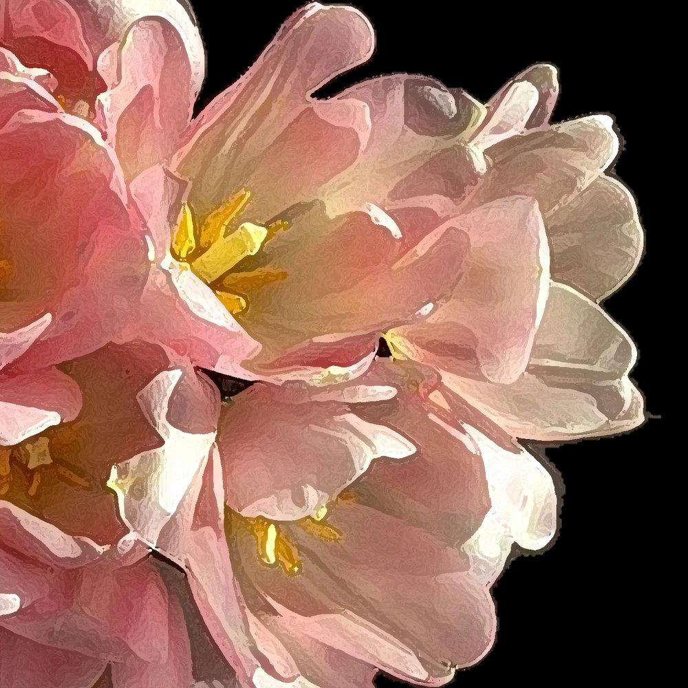 watercolor-tulips-chiaristyle.jpg