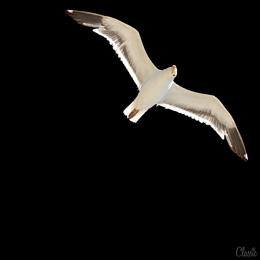 birdflight-chiaristyle-2018.jpg