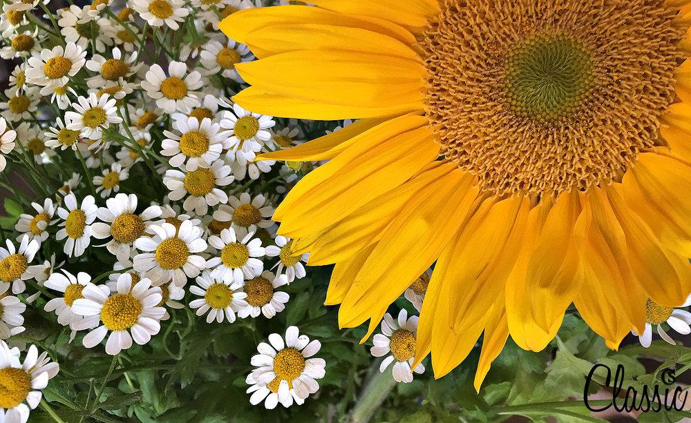 Sunflowers & daisies.