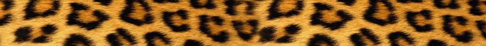 Cheetah-CHIARIstyle.jpg
