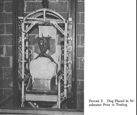 Three photos: An embalmed dog placed in a testing frame. The device that was fixed to the dog's vertebra to study forces under acceleration. The dog in the frame put inside the Wayne State Accelerator (elevator shaft). The same kinds of studies were conducted using living animals.