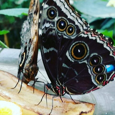 More butterfly  #butterflyworld