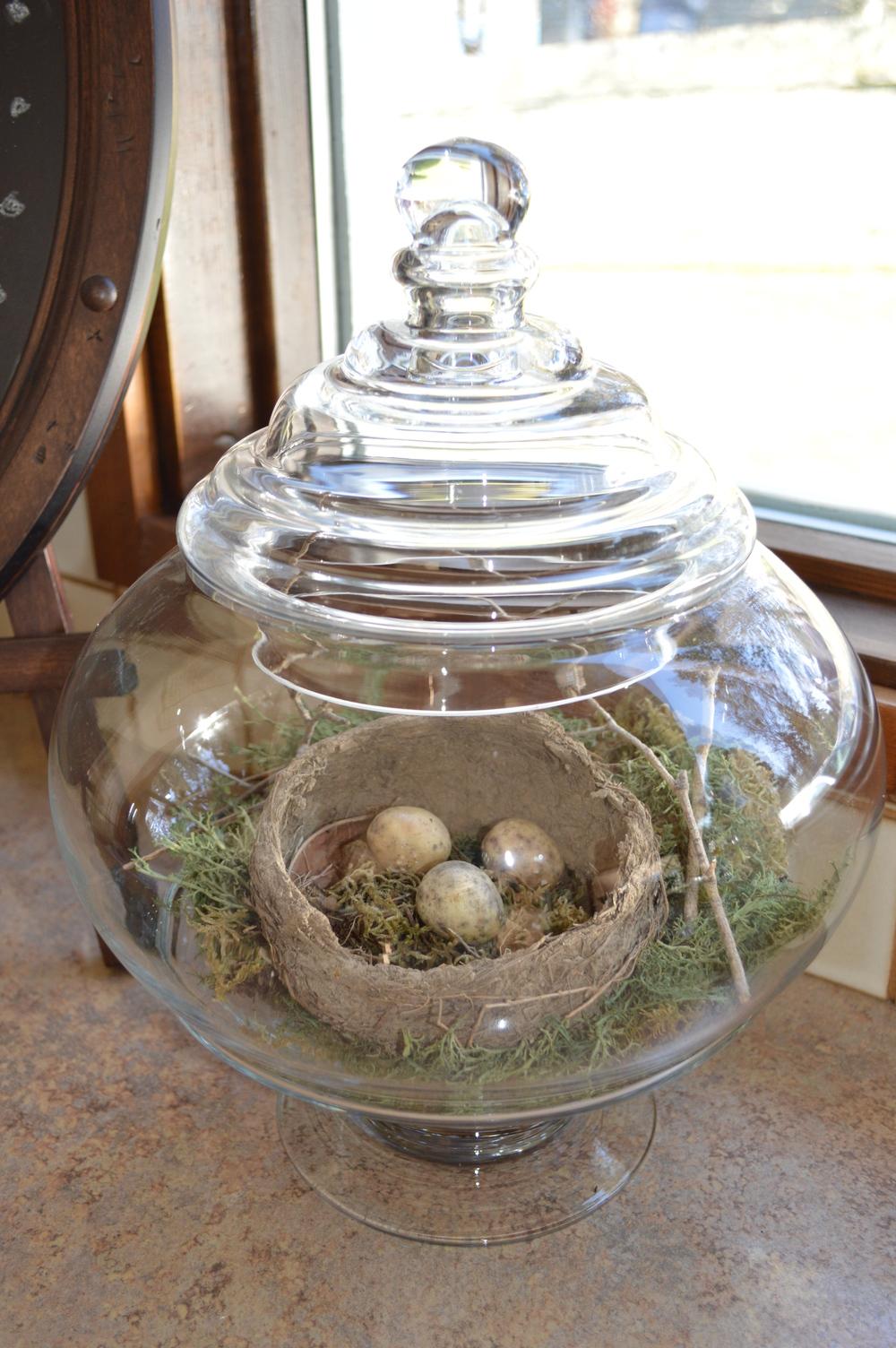 A found abandoned bird's nest...