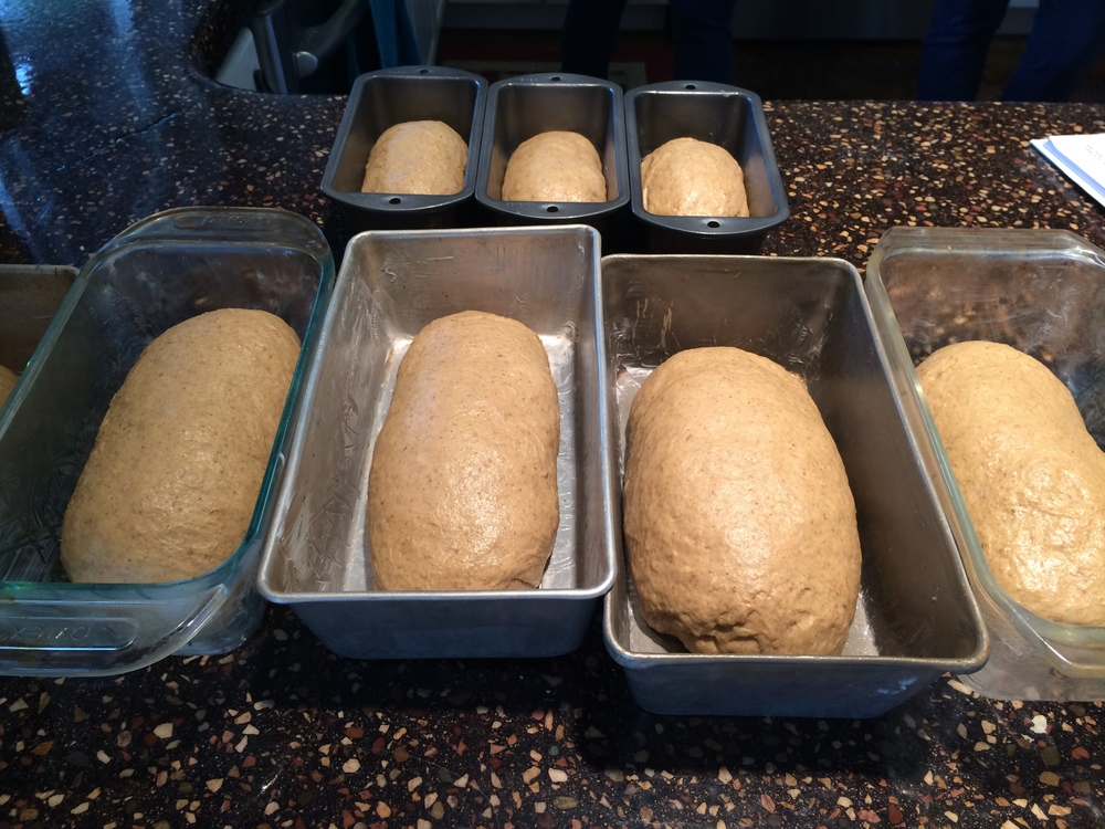 Loaves ready to bake...
