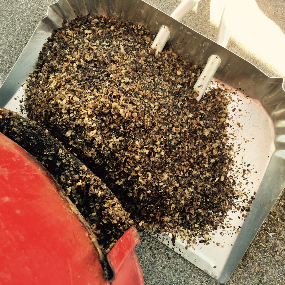 Cleaning out coffee chaff